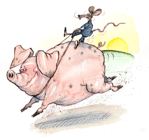 village - pigs