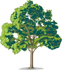 tree45