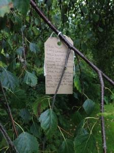 Lexy's weeping birch #2