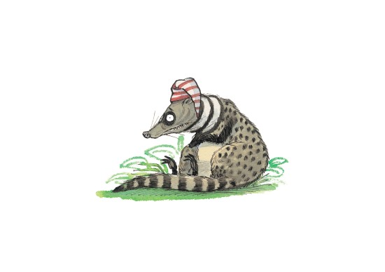 Civet cat lo res