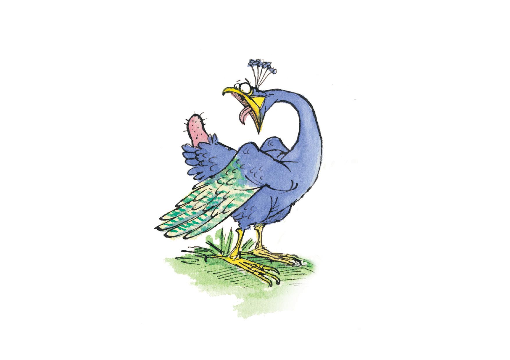 peacock lo res