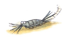 The woodlouse thingie