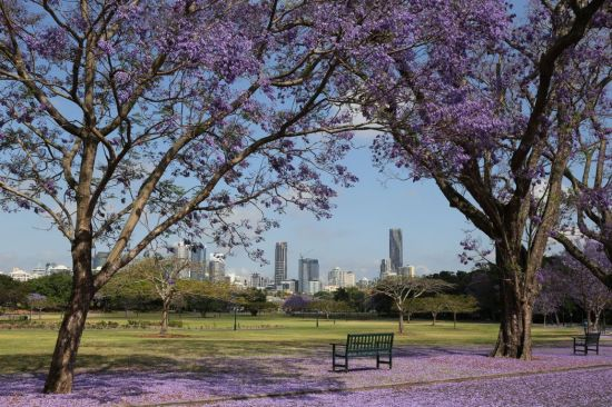 new-farm-park-with-brisbane-skyline-in-the-background_photosbyfarr