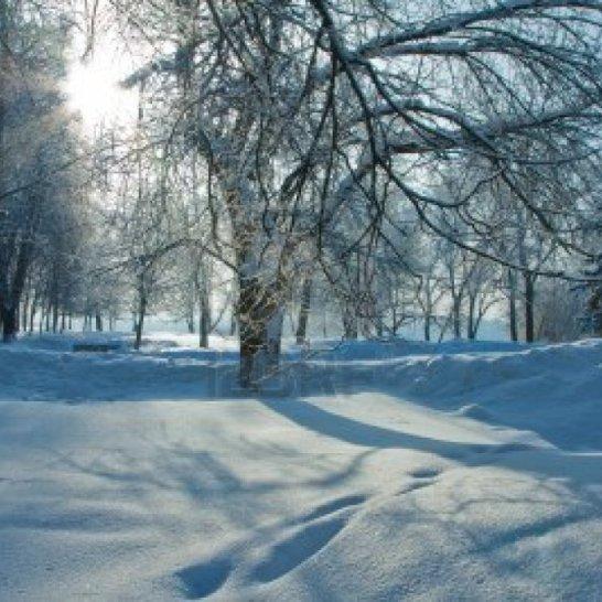 beautiful-nature-winter